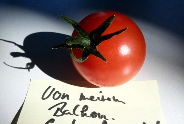 Dörtes Tomate