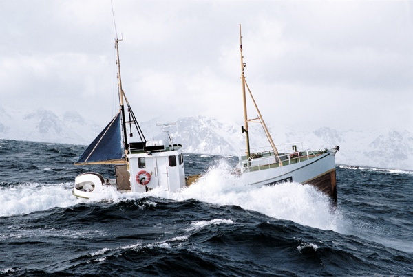 Das große Skrei Abenteuer Lofoten  Boot