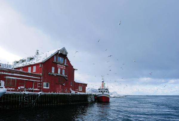 Das große Skrei Abenteuer Haus Norwegen