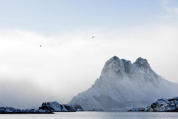Das große Skrei Abenteuer Lofoten