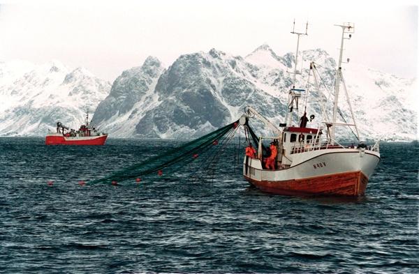 Das große Skrei Abenteuer Fischerei Norwegen
