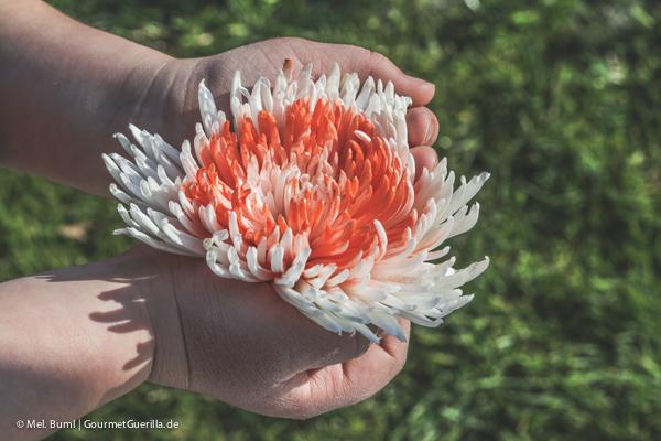 Korallenblume für Gretas umwerfendes Rhabarber-Tiramisu mit Eierlikör  GourmetGuerilla.de