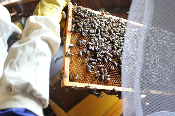 Imker mit Bienenwaben nearBees |GourmetGuerilla.de