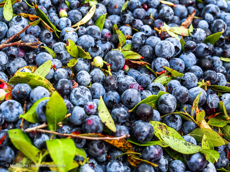 Kanada Nova Scotia Wilde Blaubeeren |GourmetGuerilla.de
