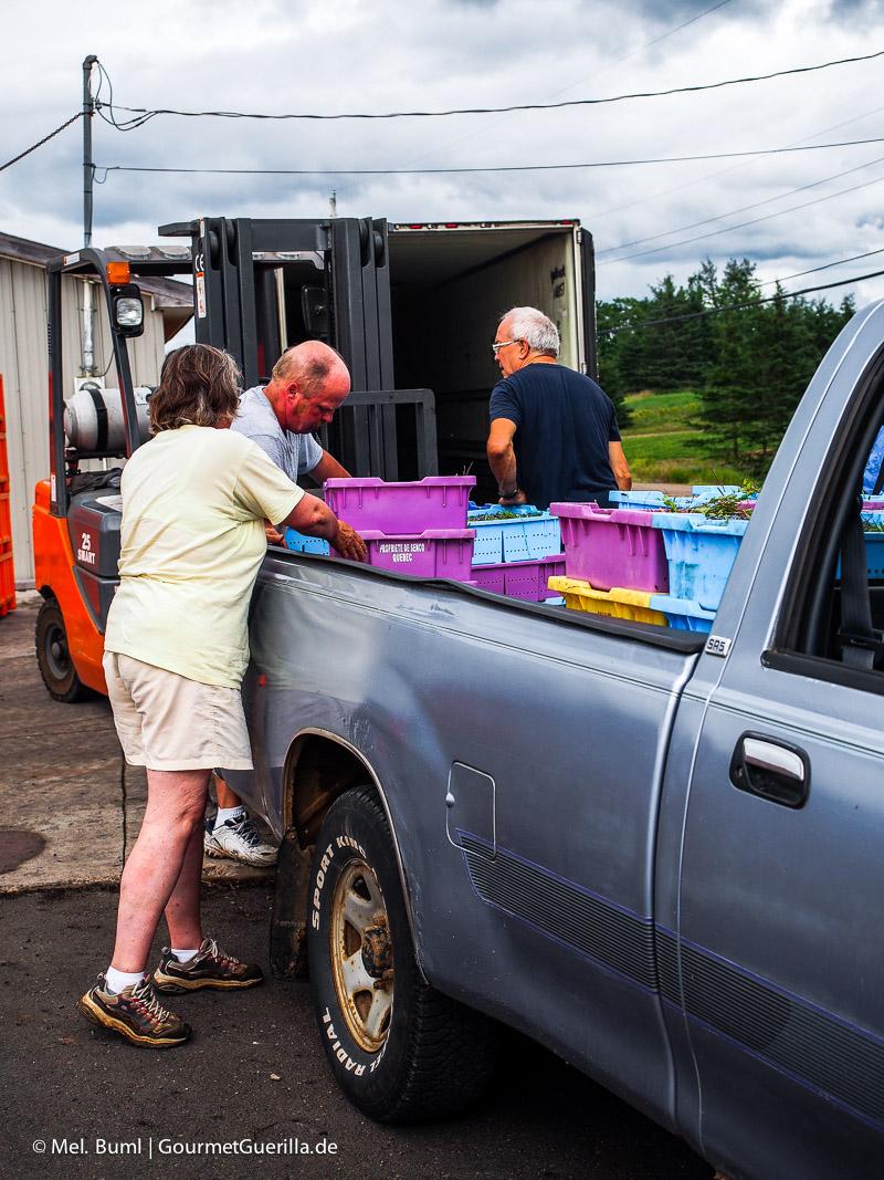 Kanada Nova Scotia Sammelstelle für Wilde Blaubeeren |GourmetGuerilla.de