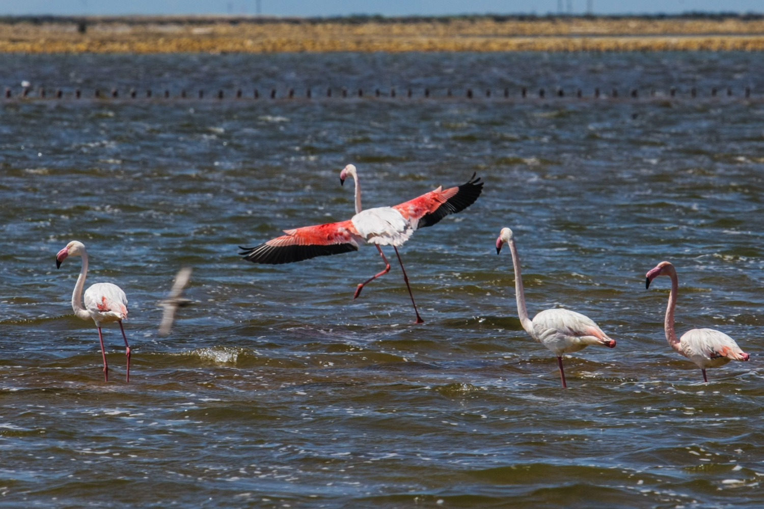 Travel France - Groupe Salins_Flamingos