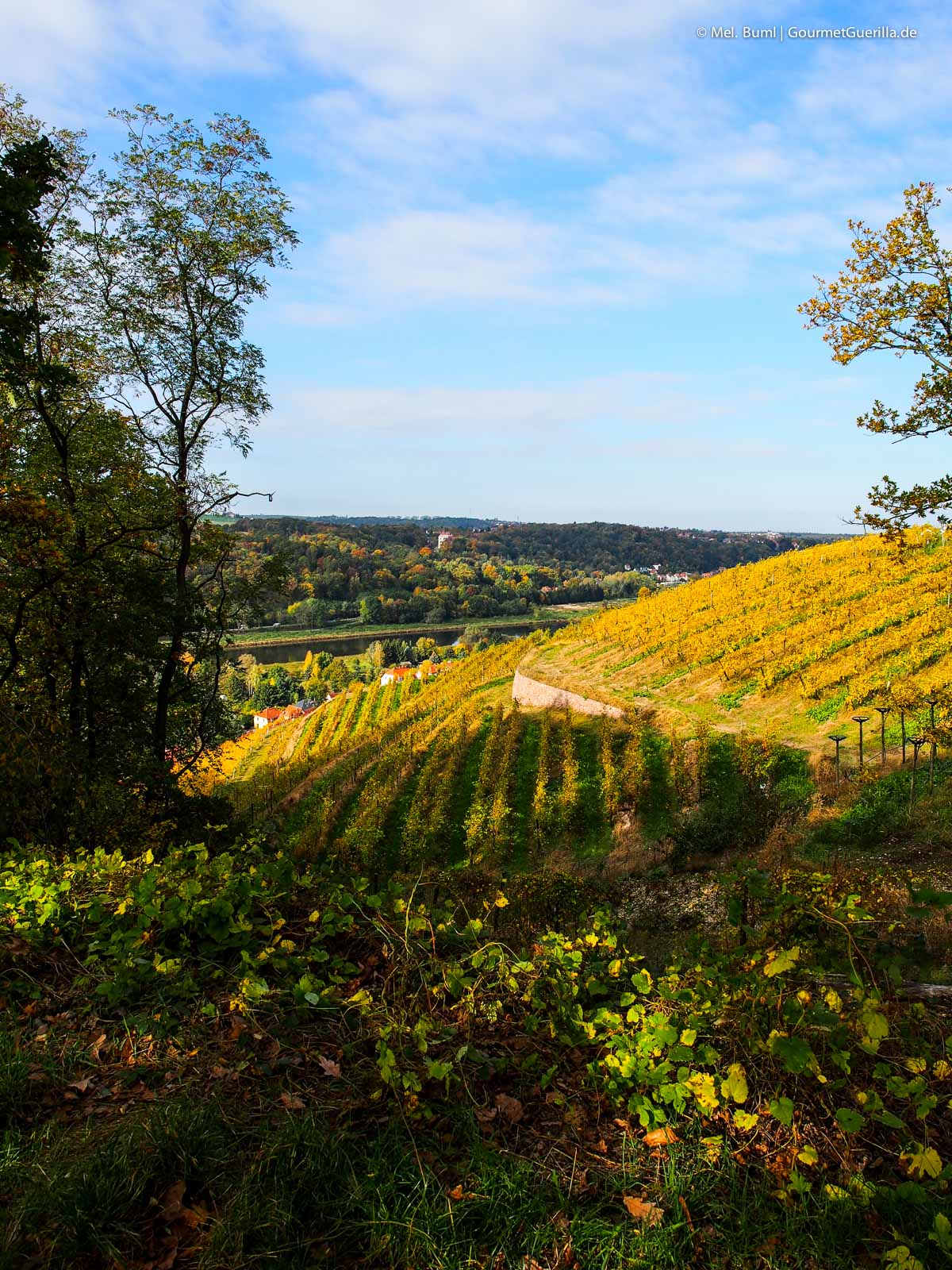 Ausblick auf Meißen Sächsische Weinstraße |GourmetGuerilla.de