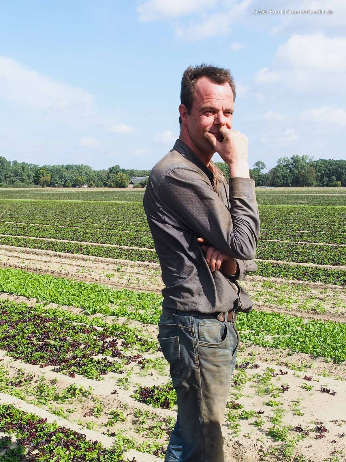 Salatbauer Salatmischung auf dem Feld Eisbergsalat auf dem Feld Bonduelle Academy Salat Anbau und Verarbeitung |GourmetGuerilla.de