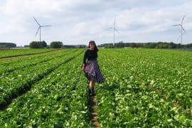 Im Salatfeld am Niederrhein Bonduelle Academy |GourmetGuerilla.de
