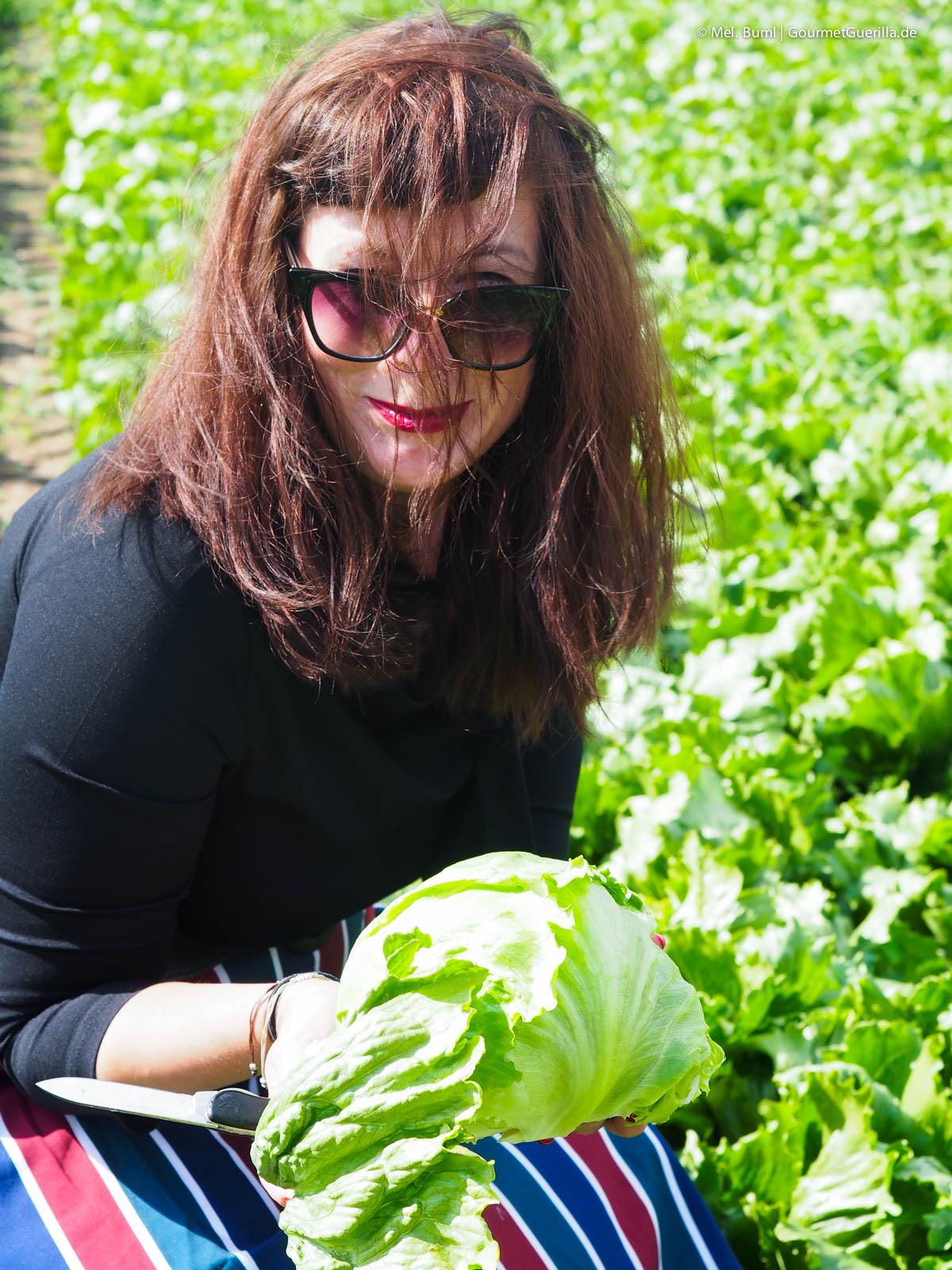 Bonduelle Academy Salat Anbau und Verarbeitung |GourmetGuerilla.de