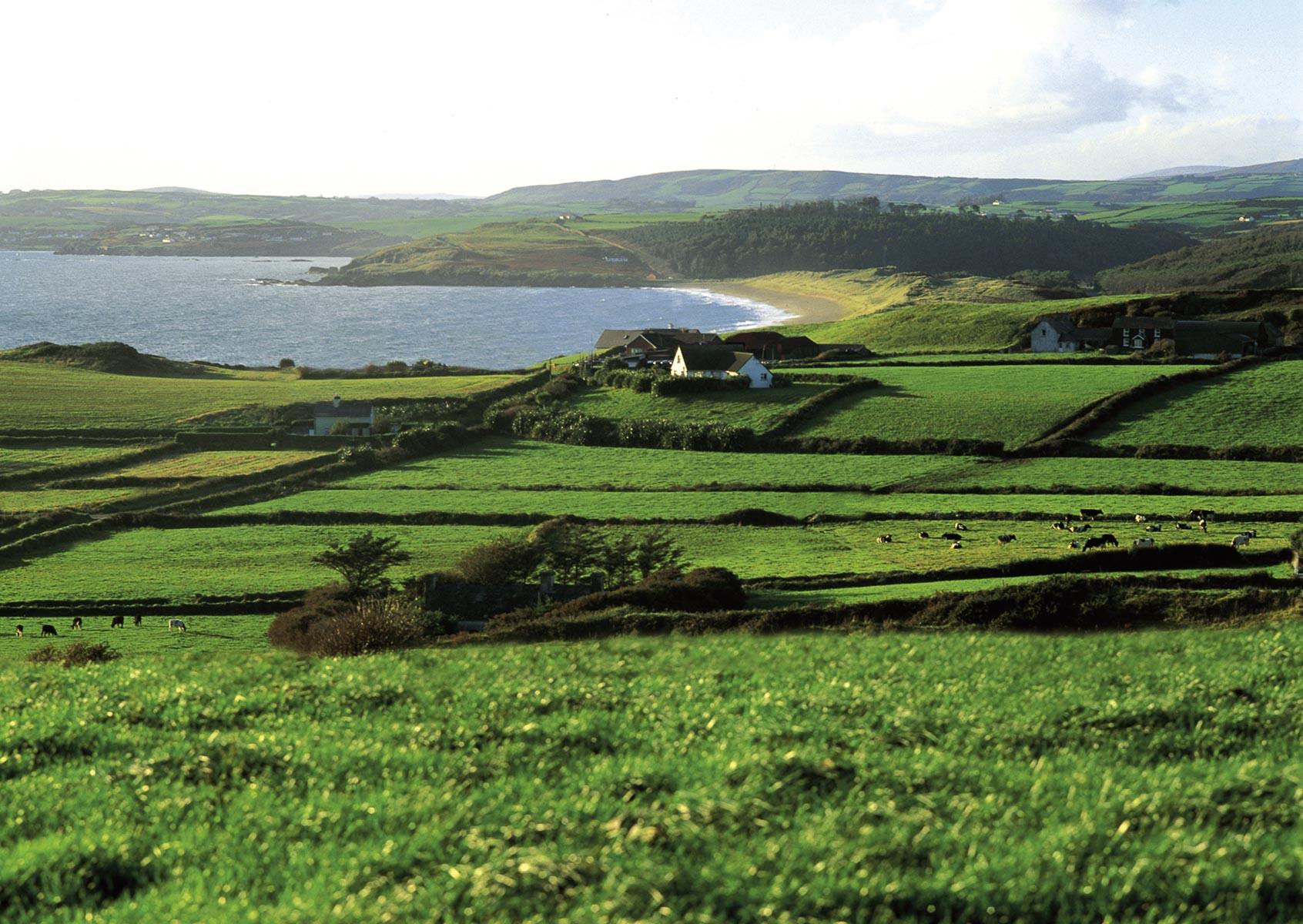 Irish Beef Bord Bia Weiden in Irland |GourmetGuerilla.de