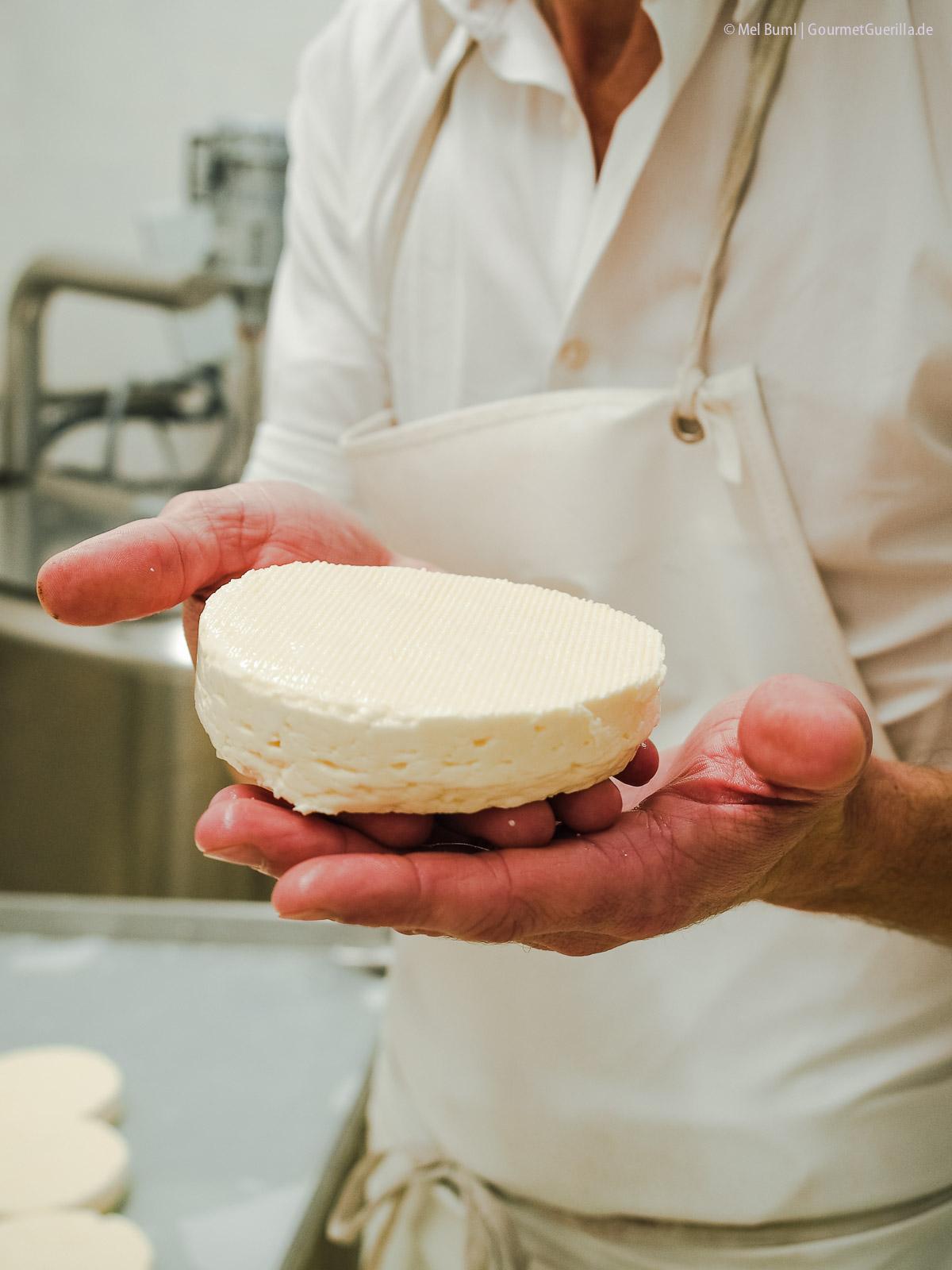 Camembert-Rohling für Heumilchkäse in Wiens einziger Stadtkäserei Lingenhel |GourmetGuerilla.de