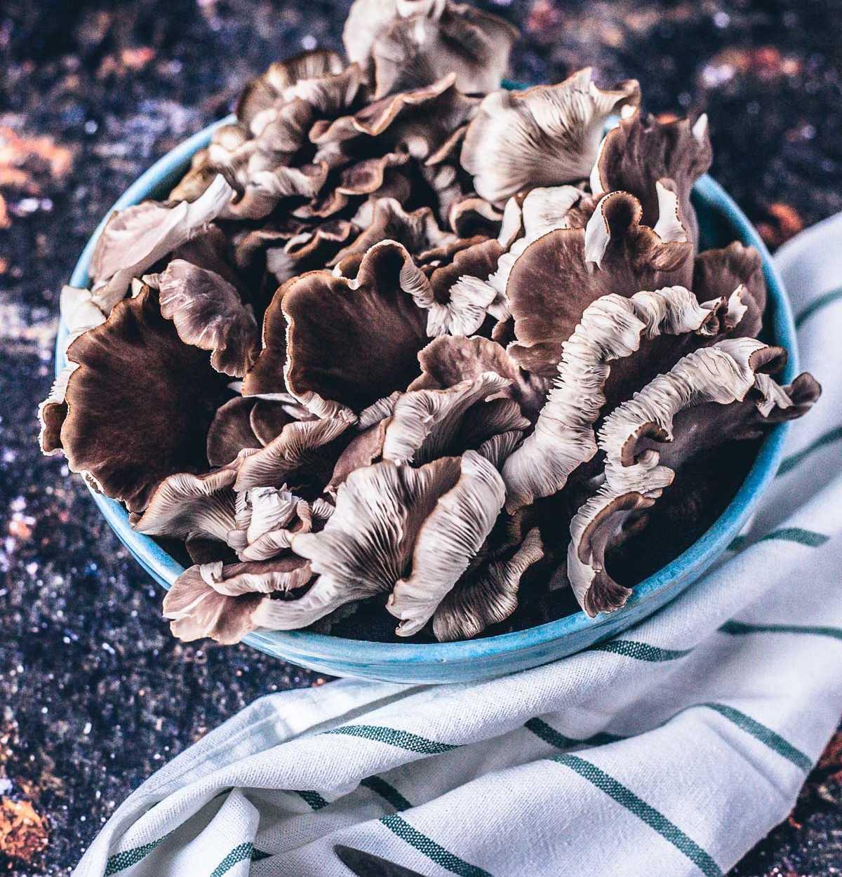 Pilze einfach zu Hause selber züchten Pilzkit Pilzgarten Helvesiek |GourmetGuerilla.de