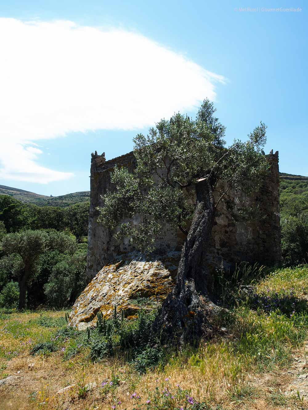 Taubentürme Reisebericht Tinos Foodpath griechische Insel Kykladen Griechenland |GourmetGuerilla.de