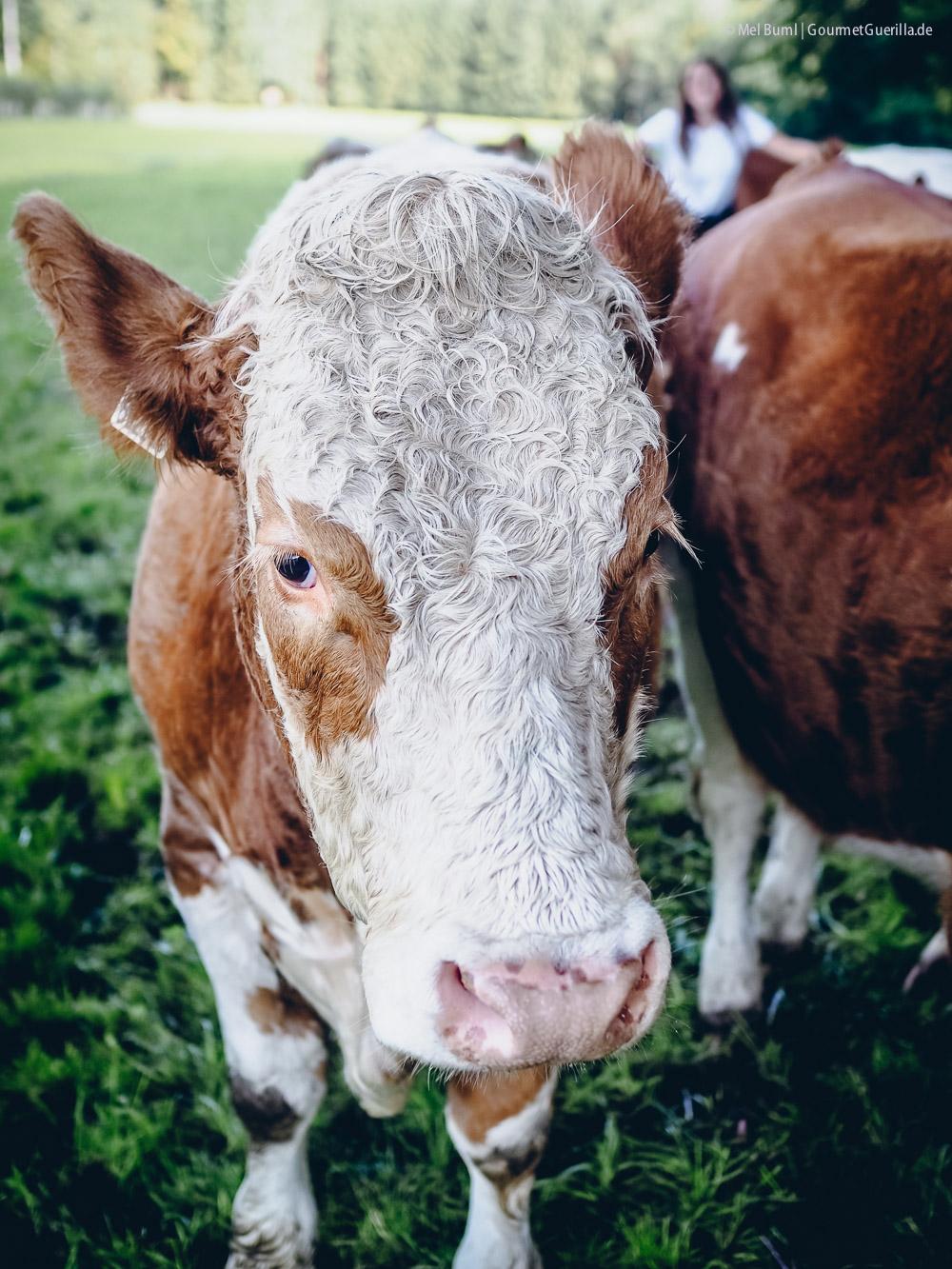 Die Kuh-Flüsterin vom Wallnerbauernhof. Eine Liebesgeschichte mit Heumilch g.t.S. im Salzburger Land #sennermeetsblogger |GourmetGuerilla.de