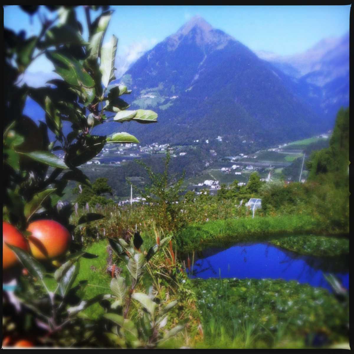 Apfelwiesen Südtirol |FoxyFood.de